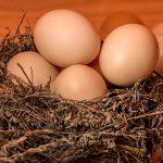 【40代KLC通院ブログ】受精卵凍結のKLC方針は?卵子凍結は可能?