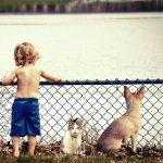 マダニのSFTSウィルスが飼い犬から人へ感染!猫からの感染に続き2例目!